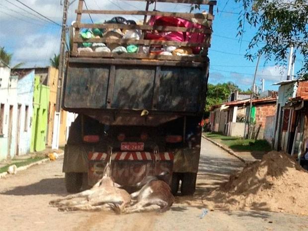 Jegue (Foto: João Matheus/Site Políticos do Sul)