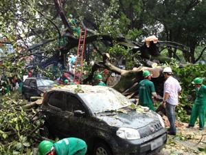 Equipes retiram árvore que caiu encima de quatro carros no Parque Solon de Lucena, em João Pessoa (Foto: André Resende/G1)