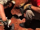 Bombeiros resgatam cadela e sete filhotes presos em bueiro; veja vídeo