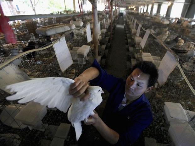 Criador de pombos chinês relata prejuízos causados pelo surto de gripe aviária (Foto: Reuters/Stringer)