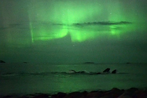 Equipe de televisão local filmou baleias sob luz da aurora boreal (Foto: BBC)