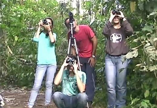 Pesquisadores do INPA estudam comportamento do gavião-real (Foto: Amazônia TV)