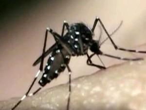 Mosquito Aedes aegypti, transmissor do vírus da zika (Foto: Reprodução / EPTV)