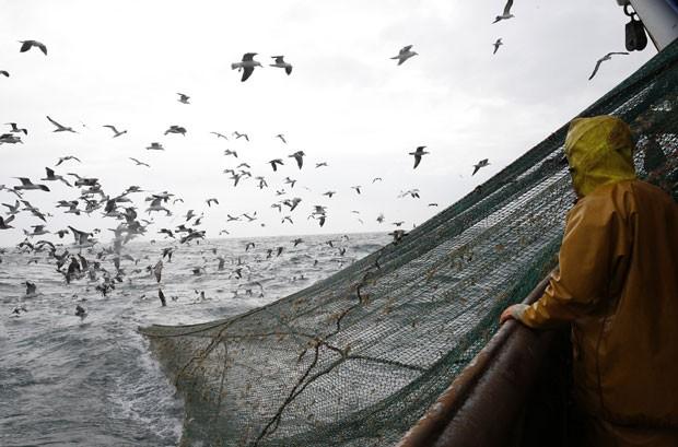 Um bando de gaivotas atacou as redes de pescas enquanto os pescadores tentavam puxá-las para o navio em Boulogne-sur-Mer, na França (Foto: Pascal Rossignol/Reuters)