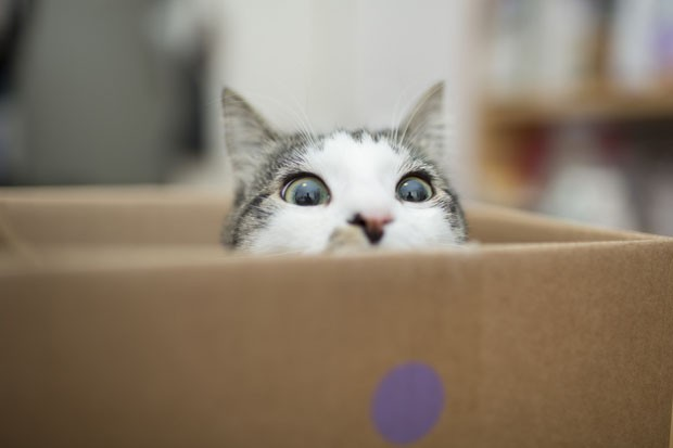 Cat in a boxcat in the box (Foto: Getty Images/iStockphoto)