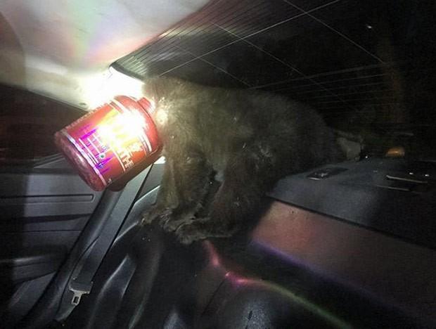 Ursinho foi encontrado com a cabeça entalada em pote de proteína (Foto: Colorado Springs Police Department)