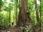 Cinco empresas concorrem à licitação de 164 mil hectares de floresta no AP