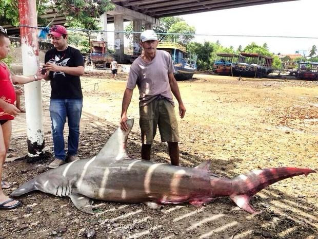 Tubarão martelo se enroscou na rede dos pescadores. Eles afirmam que presença de tubarões é comum no local. (Foto: Rui Lima/Arquivo Pessoal)