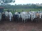 Polícia apreende cabeças de gado roubadas em fazenda de Mirassol