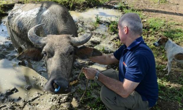 A ONG tem como preocupação específica o bem-estar de animais em zonas de desastre (Foto: Divulgação/World Animal Protection)