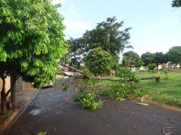 Árvores cairam durante tempestade (Foto: Divulgação / Defesa Civil de Lins)
