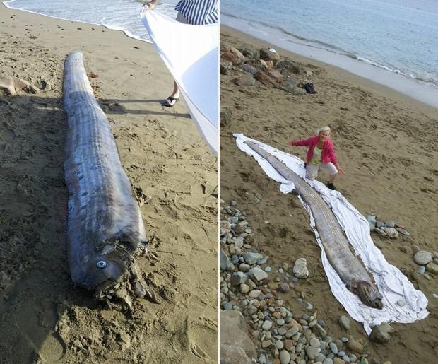 Peixe-remo de 4,3 metros foi encontrado em praia nos EUA (Foto: Reprodução/Facebook/Mountain and Sea Educational Adventures)