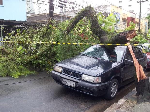 Uma árvore caiu em cima de um carro na Rua José Bonifácio, em São Vicente (Foto: Mariane Rossi/G1)