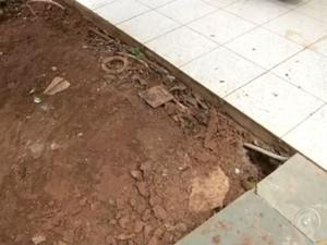Infestação de cupins traz prejuízos para moradores de bairro em Jundiaí (Foto: Reprodução/TV TEM)