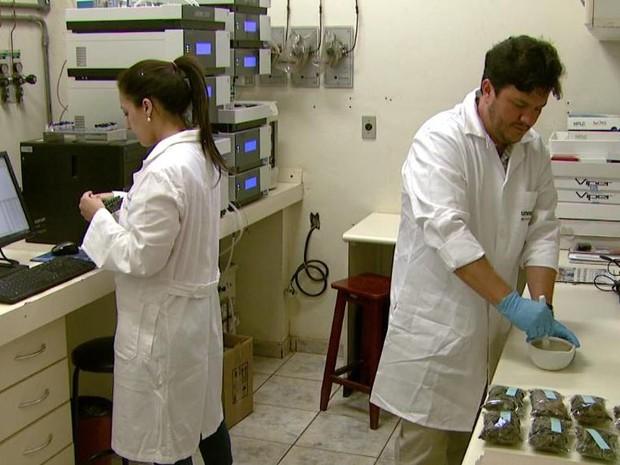 Laboratório da Unesp de Araraquara tem banco de dados de plantas medicinais (Foto: Reprodução/EPTV)