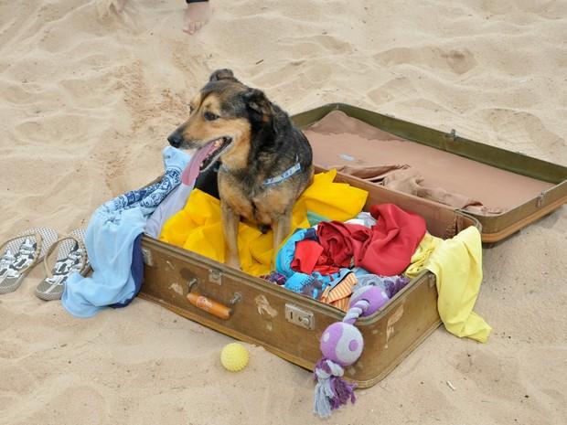 Cães de associação tiraram fotos para calendários  (Foto: Moisés Bandeira/ ONG)