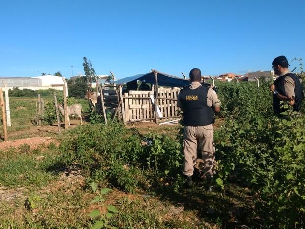 Polícia foi chamad às 6h30 deste domingo (12) (Foto: Polícia Militar/Divulgação)
