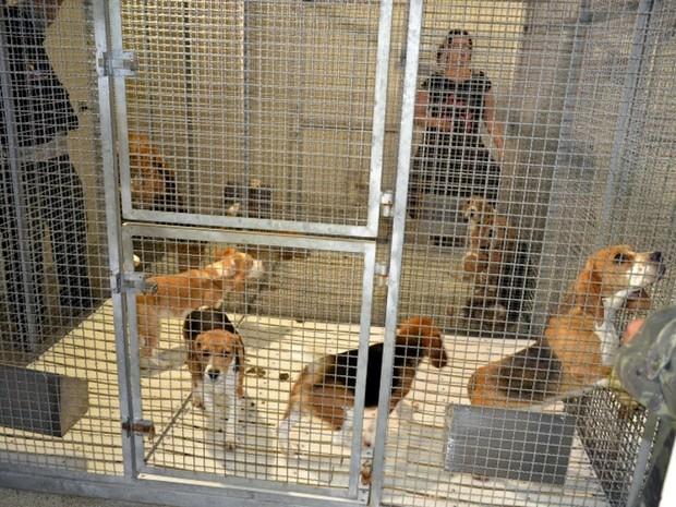 Cerca de 180 cães foram libertados pelos ativistas (Foto: Divulgação/São Roque Notícias)