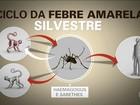 Sesab confirma primeiro caso de febre amarela em macaco em Salvador