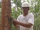Primeiro leilão de Pepro da borracha do ano oferece 400 toneladas de MT