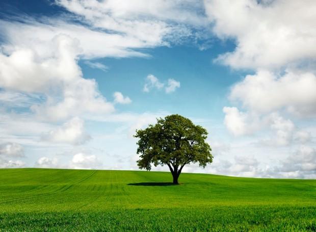 Árvore (Foto: Thinkstock)