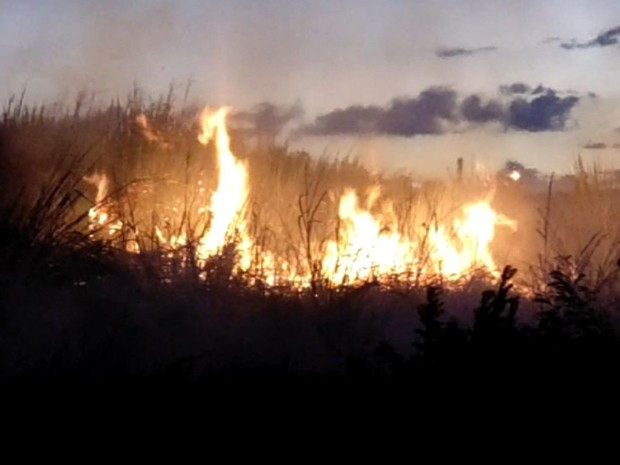 Incêndio atinge terreno em avenida perto do shopping de São Carlos, SP (Foto: Daniel Guedes/arquivo pessoal)