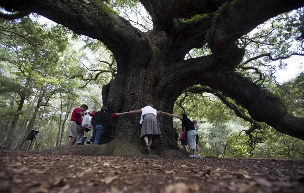 Visitantes abraçam a árvore; ambientalistas calculam que U$1,2 milhão é necessário para salvar o exemplar centenário. (Foto: Reuters/Randall Hill)