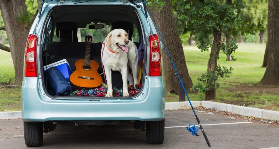 Levar o cachorro na viagem? (Foto: Thinkstock)