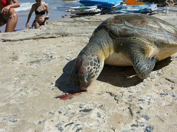 Tartaruga encontrada morta na Praia do Bessa, em João Pessoa (Foto: Laerte Cerqueira / G1)
