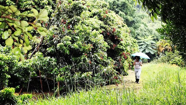 A gestora passeia em plantação de lichia na zona leste da capital paulista (Foto: Divulgação)