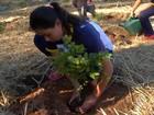 Plantio de mudas ajuda a recuperar passivo ambiental em Mogi