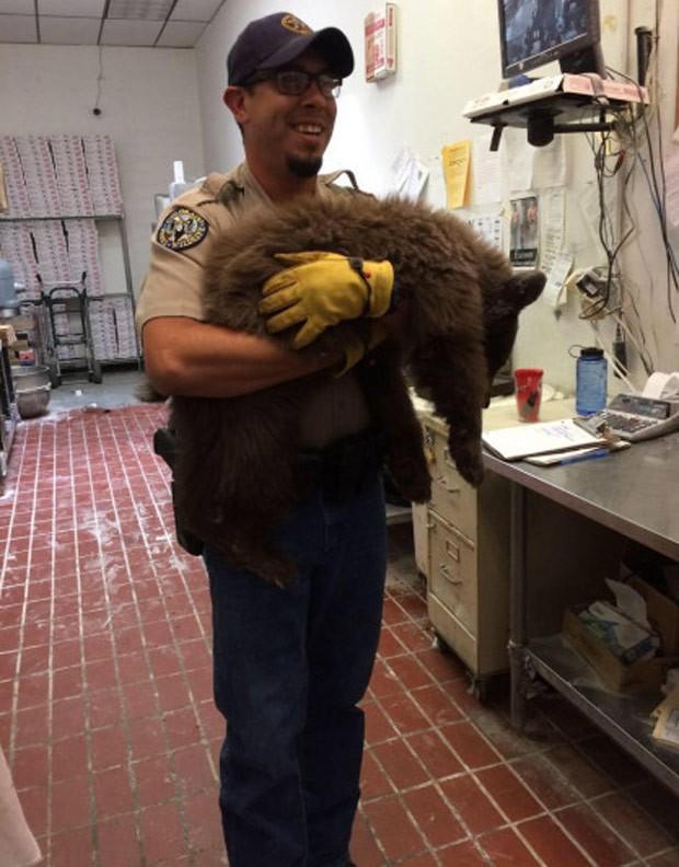 Agentes florestais sedaram filhote para conseguir capturá-lo (Foto: Colorado Springs Police Department)