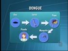 Ovos do Aedes aegypti podem ficar mais de um ano em hibernação
