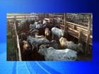 Polícia prende homem durante tentativa de furto de gado em Tanabi