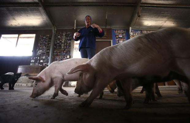 Lindy Haynes permite que animais circulem livremente pela propriedade (Foto: David Gray/Reuters)