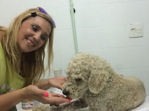 Cão está recebendo os cuidados na ONG  (Foto: Giuliana Stefanini / Arquivo Pessoal)