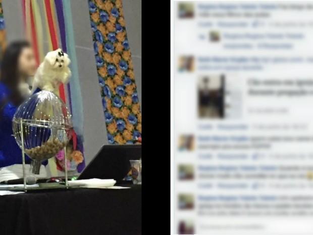 Cachorro foi doado como premiação em bingo em Ribeirão Preto (Foto: Reprodução/Facebook)