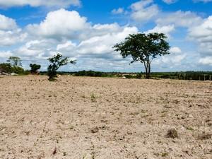 Seca é apontada pelo governo como uam das principais responsáveis pelo fraco desempenho alagoano no índice de Desenvolvimento Humano municipal. (Foto: Jonathan Lins/G1)