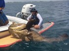 Em prancha, pescador fisga peixe monstruoso na costa dos EUA