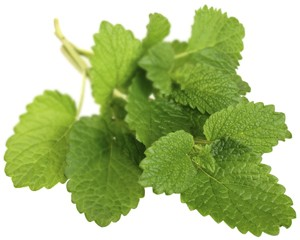 Lemon Balm (Foto: Getty Images/iStockphoto)