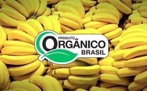 Mercado de produtos orgânicos cresce no Brasil