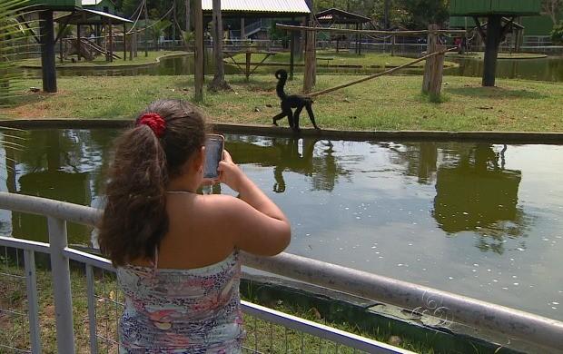 Criançada aproveitou para conhecer animais da floresta (Foto: Bom Dia Amazônia)