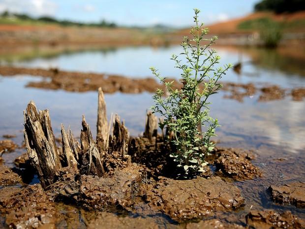 Há três semanas, o volume armazenado de água do Sistema Cantareira cresce diariamente. (Foto: Luis Moura/ Estadão Conteúdo)