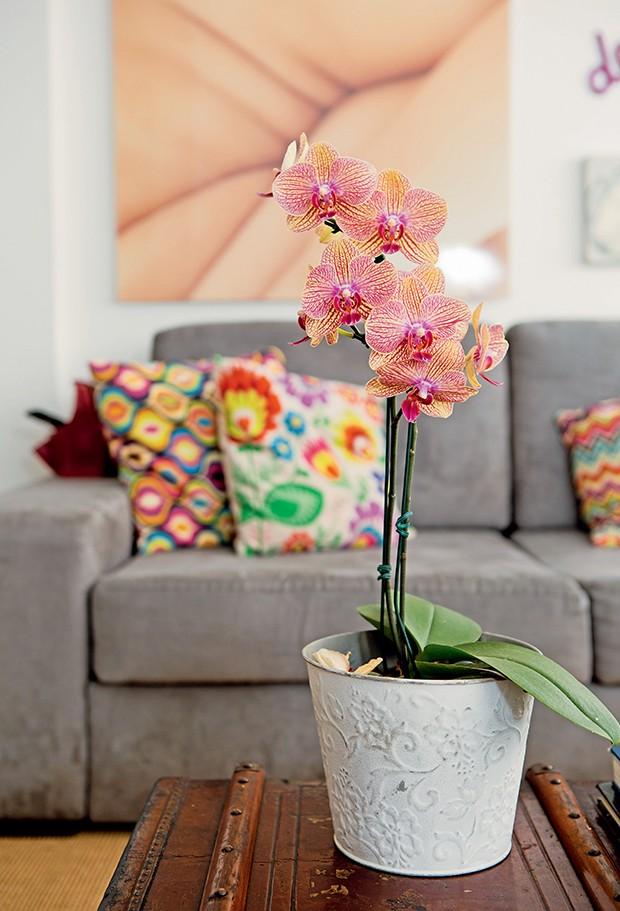 """""""Coleciono bromélias e orquídeas. Depois que elas deixam de dar  flores, levo para o sítio que tenho na região serrana do Rio""""  (Foto:  )"""