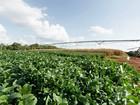 Empresas miram 'Vale do Silício' da agricultura e mudam para Piracicaba