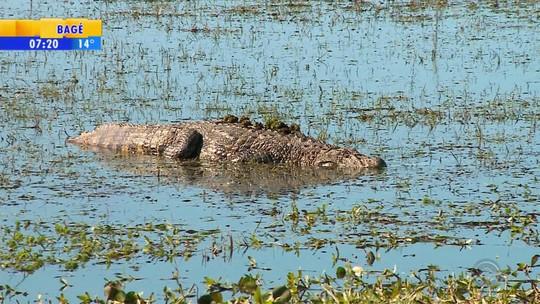 Reserva do Taim é reconhecida como uma das principais áreas ambientais do mundo