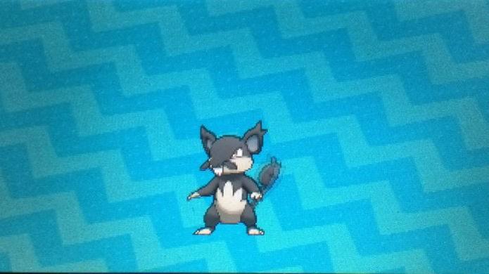 Pokémon Sun e Moon: O filho de um Rattata de Kanto será um Rattata Alola Form (Foto: Reprodução / Thomas Schulze)