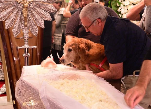 Cosmos, cachorro de estimação de Kid Vinil, 'se despede' do dono (Foto: Léo Franco/Agnews)