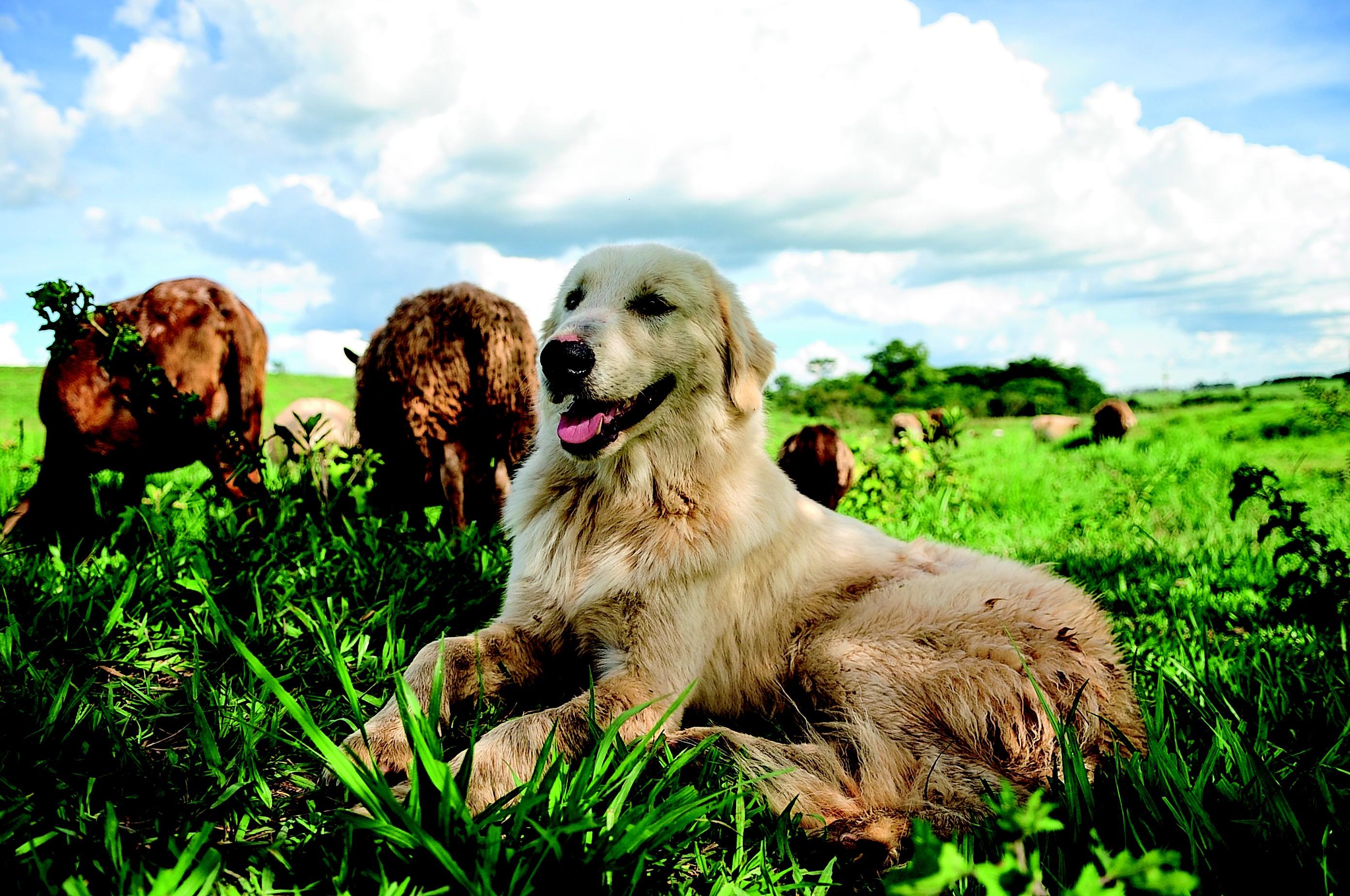 vidanafazenda_pastormaremanoabruzes_cachorro (Foto: Ernesto de Souza/Ed. Globo)
