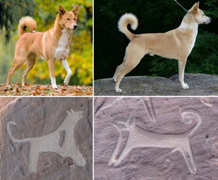 Desenhos antigos de cachorros (Foto: Guagnin et al., J. Anthropol. Archaeol, 2017)